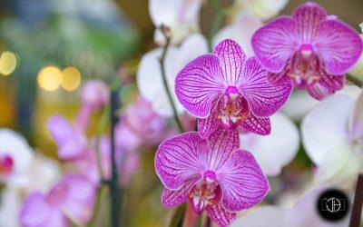 Orchidées, décoration de mariage